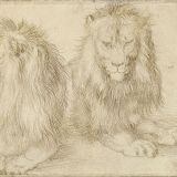 Albrecht Durer - De leeuw van Gent van twee kanten geschetst